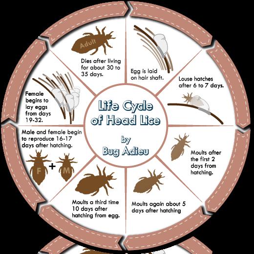 Facts | Anti Lice Angel - photo#23